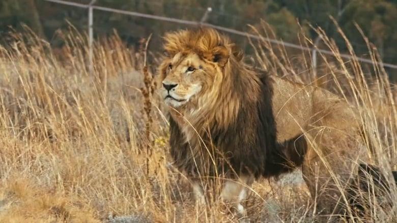 Lionsrock: Return Of The King