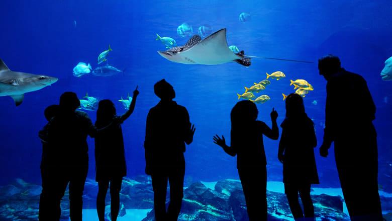Watch The Aquarium Online Watch Series Online Tv Shows Full Episode Free