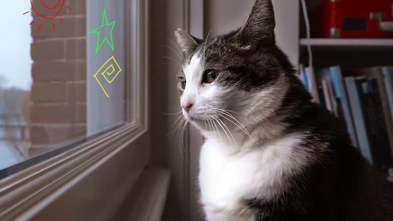 مشاهدة فيلم Kitty Love: An Homage to Cats 2021 مترجم أون لاين بجودة عالية