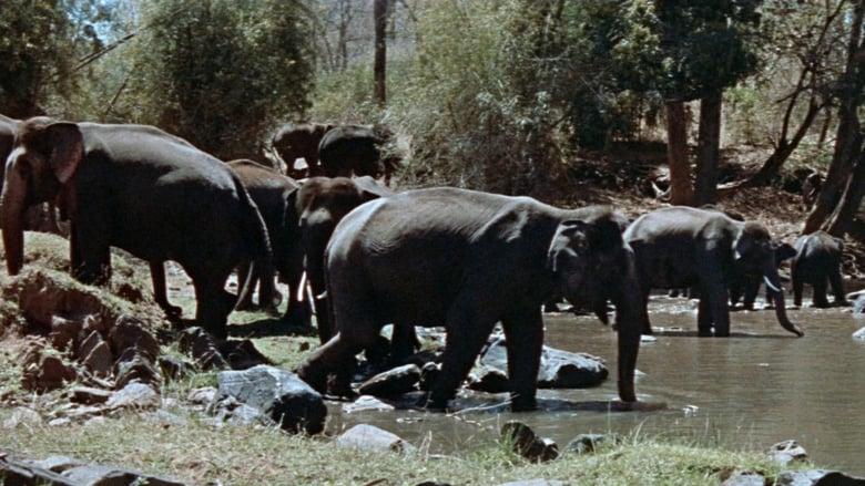 Tarzan's Three Challenges (1963)