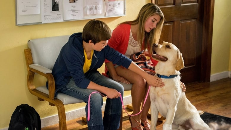 Voir Marshall the Miracle Dog streaming complet et gratuit sur streamizseries - Films streaming