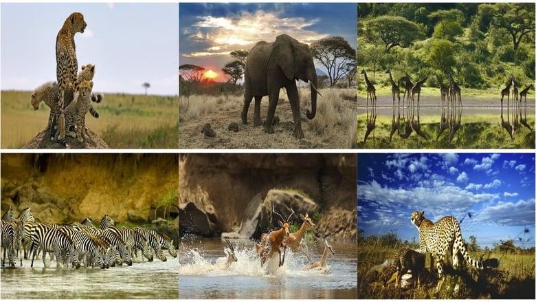 مشاهدة فيلم Serengeti 2011 مترجم أون لاين بجودة عالية