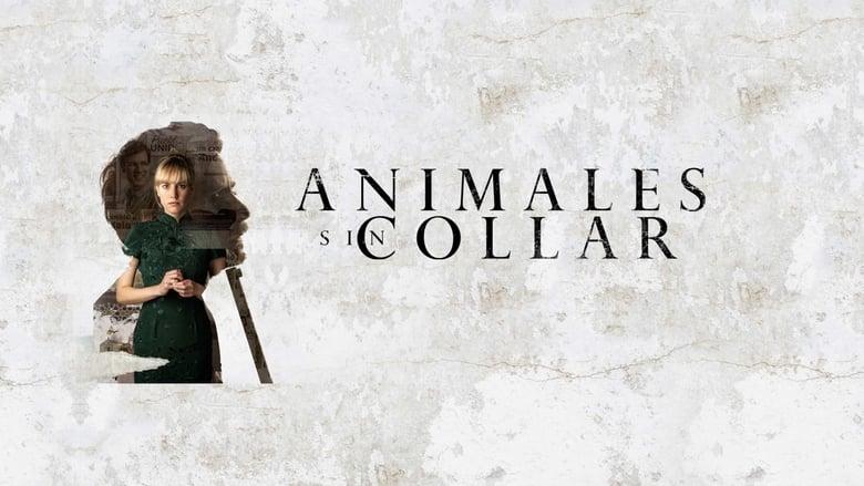Animales+sin+collar