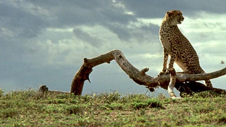 Un+ghepardo+per+amico+-+Un%27avventura+in+Africa