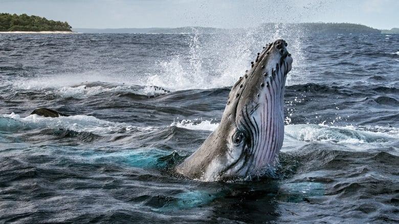 I+Segreti+delle+Balene