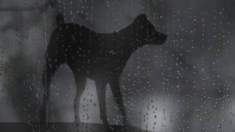 فيلم Heart of a Dog 2015 مترجم اونلاين