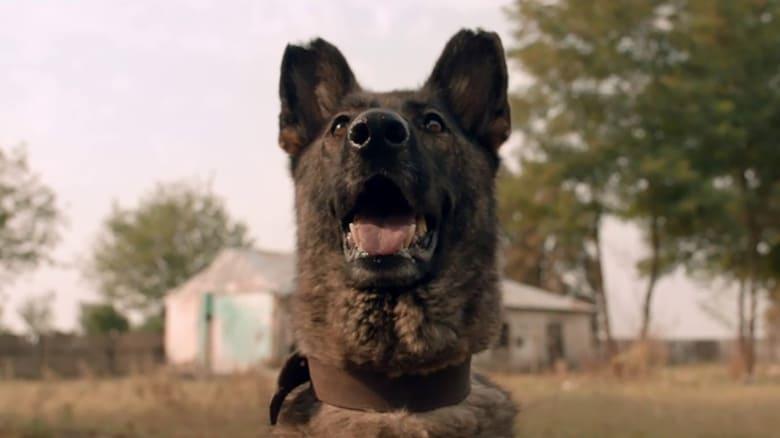 Voir Dogs streaming complet et gratuit sur streamizseries - Films streaming