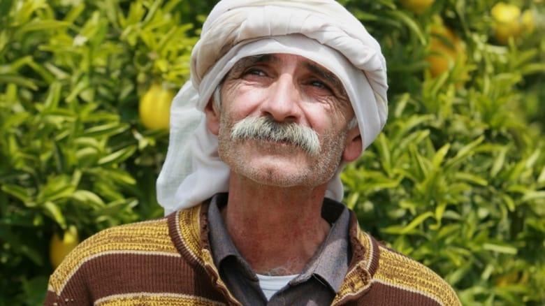 Il+giardino+di+limoni