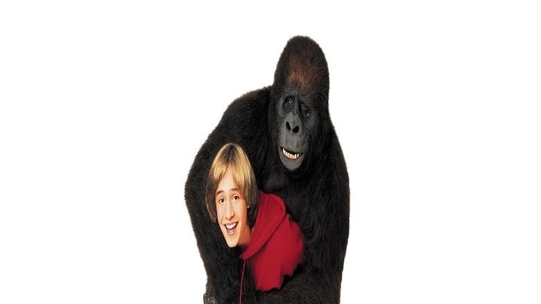 Una+gorilla+per+amica