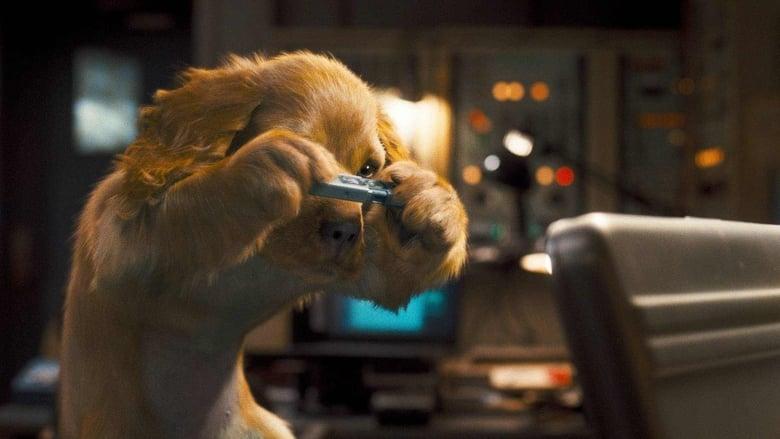 Σαν το σκύλο με τη γάτα 2: Η εκδίκηση της Κίτι Γκαλόρ