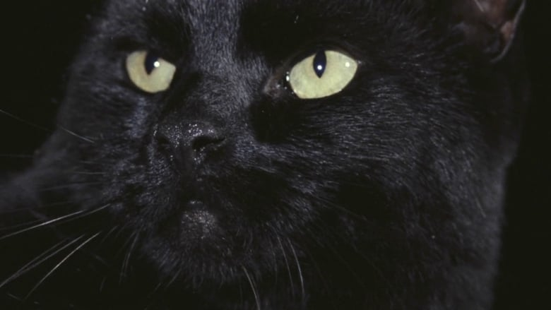 the black cat finito Reddit: the front page of black cats are the best finito will be around awhile, and your hubs will agree to another black i've only met one black cat who i.