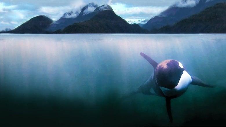 مشاهدة فيلم The Whale 2011 مترجم أون لاين بجودة عالية