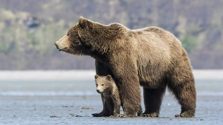 Voir Grizzly streaming complet et gratuit sur streamizseries - Films streaming