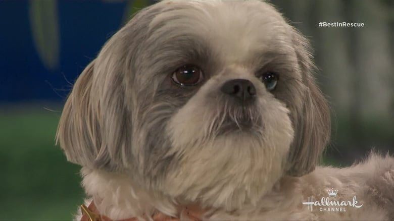Watch The 2018 American Rescue Dog Show free