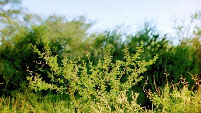 Guarda Film Ceniza Verde Con Sottotitoli Online