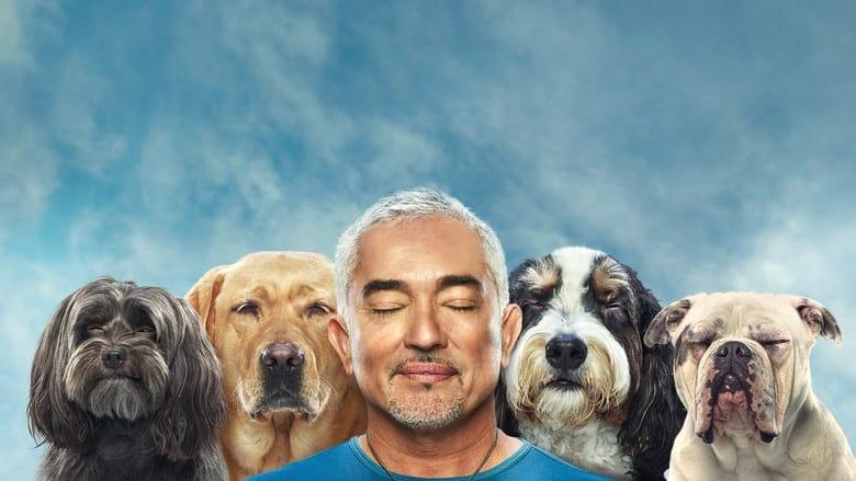 مسلسل Cesar Millan: Better Human, Better Dog 2021 مترجم اونلاين
