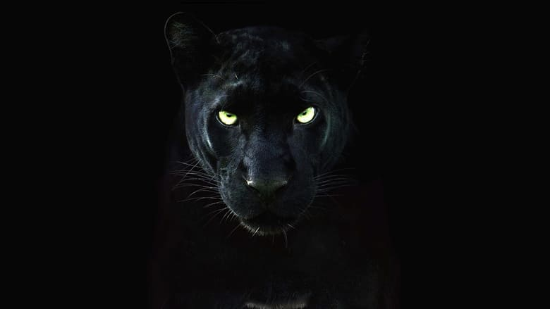 Pantera Negra: O Reino Selvagem