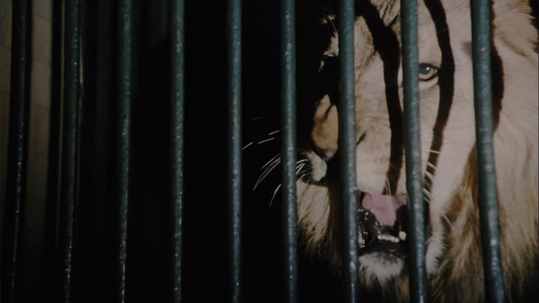 Wild+Beasts+-+Belve+feroci