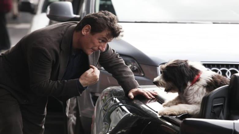 Film Un cane per due En Français En Ligne