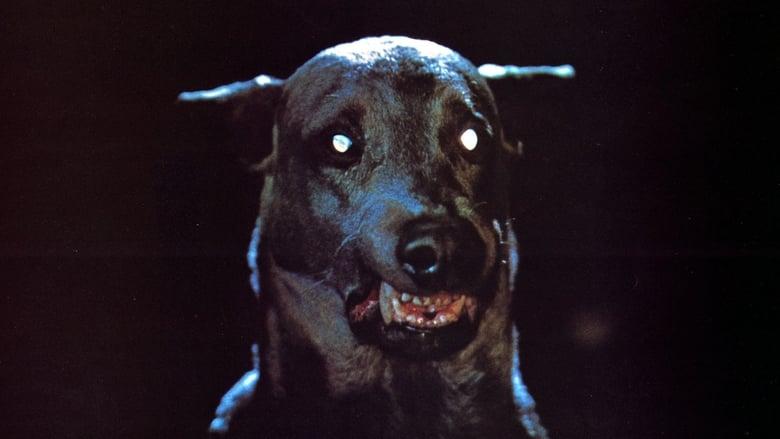Voir Zoltan, le chien sanglant de Dracula en streaming complet vf | streamizseries - Film streaming vf