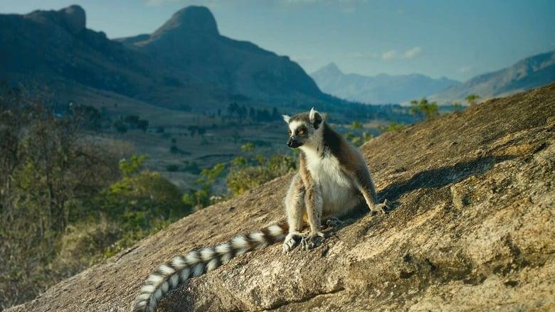 Madagascar%3A+L%27isola+dei+Lemuri
