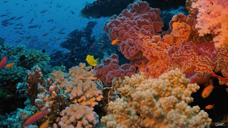 Watch Coral Reef Adventure 2003 Online tinyzonehd