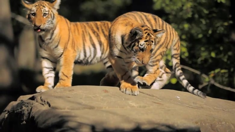 72 Cutest Animals Sezonul 1 Episodul 12 Online Subtitrat FSonline