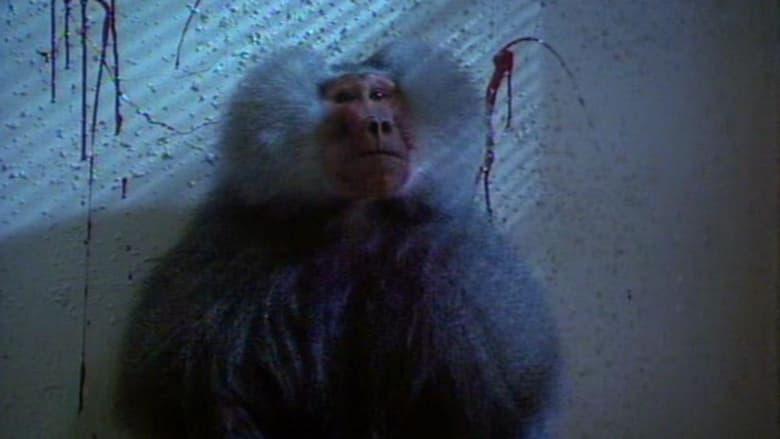 Shakma+-+La+scimmia+che+uccide