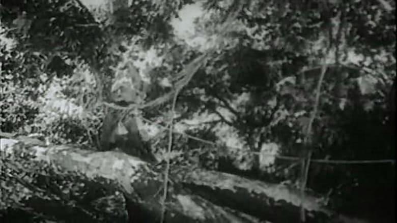 Regarder Film Tarzan the Fearless Gratuit en français