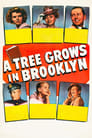 A Tree Grows in Brooklyn (1945) Movie Reviews