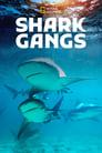 مترجم أونلاين و تحميل Shark Gangs 2021 مشاهدة فيلم