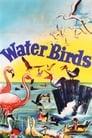 [Voir] Water Birds 1952 Streaming Complet VF Film Gratuit Entier
